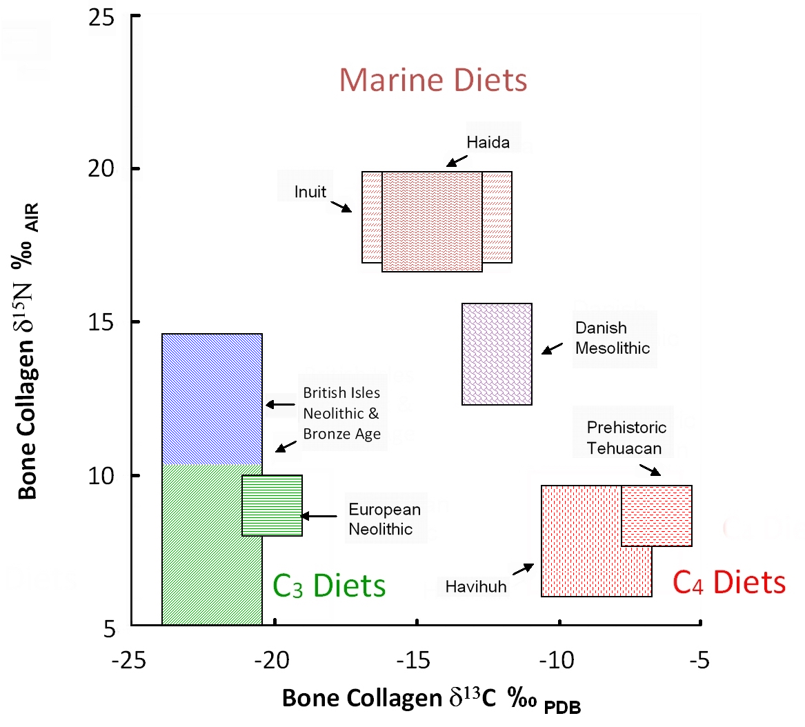C N isotopes human health diet